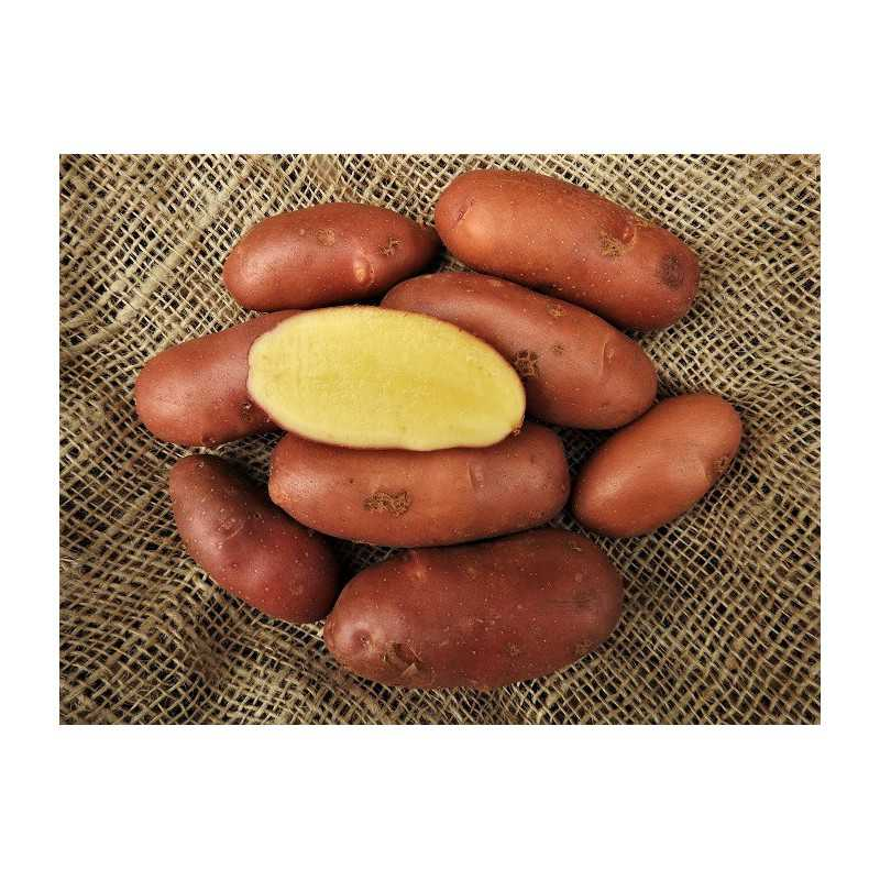 French fingerling