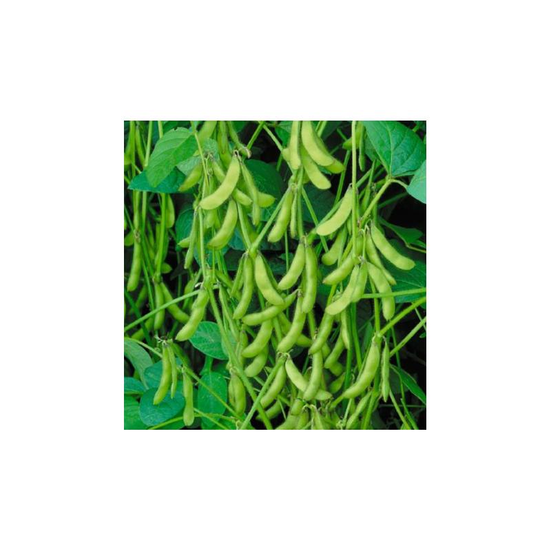 sojaboon, Edamame Green Shell