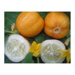 Komkommer Crystal Lemon